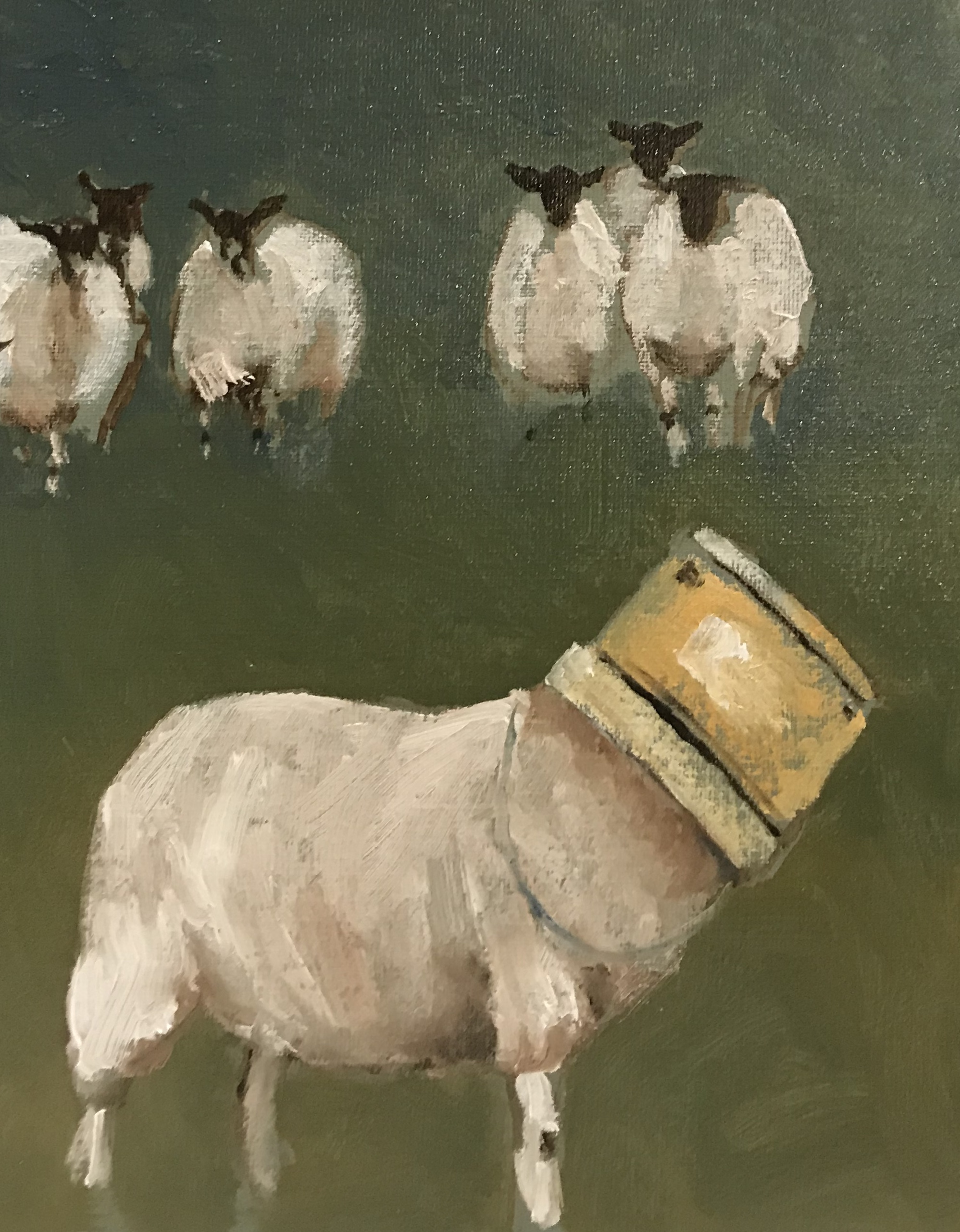 A sheep has a feed bucket over her head. The rest of the flock looks on.